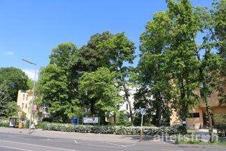 Lage des Senioren Centrums hinter hohen Bäumen